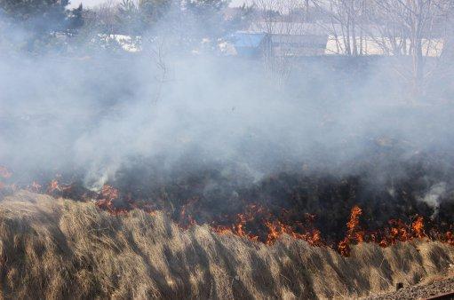 zdjęcie przedstawia wypalanie traw